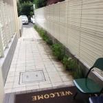 plants of 8Hotel