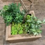 plants of SONIC JAM