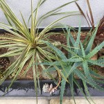 Plants of K's House