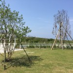 Plants of KANOSUKE